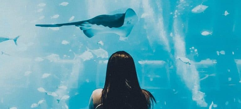 A woman is watching the fish in the aquarium.